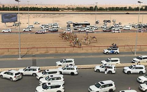 CAMEL RACES / DUBAI / UNITED ARAB EMIRATES